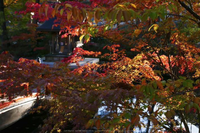 高野山,紅葉(P1000230,F2.8,34mm,LX100)2014yaotomi.jpg