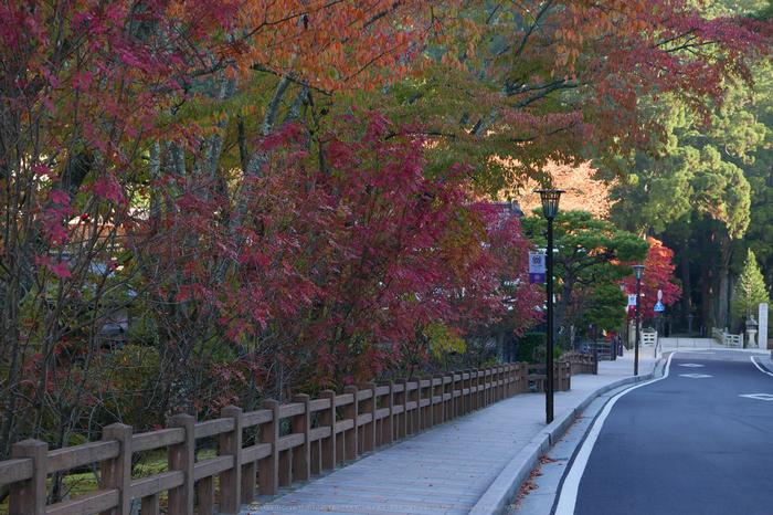 高野山,紅葉(P1000238,F3.5,34mm,LX100)2014yaotomi.jpg