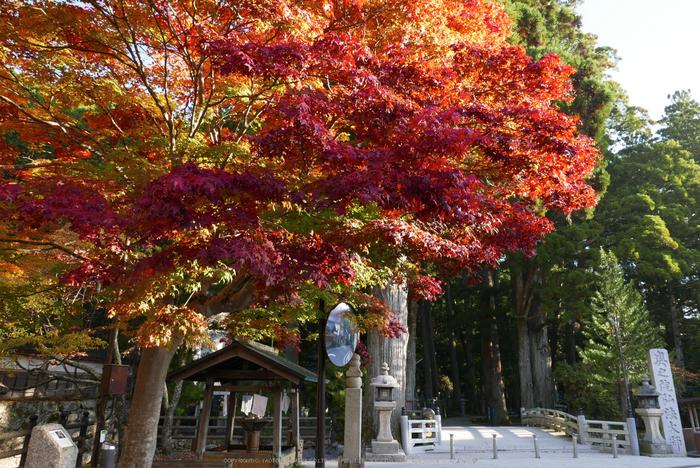高野山,紅葉(P1000246,F5.6,10.9mm,LX100)2014yaotomi.jpg