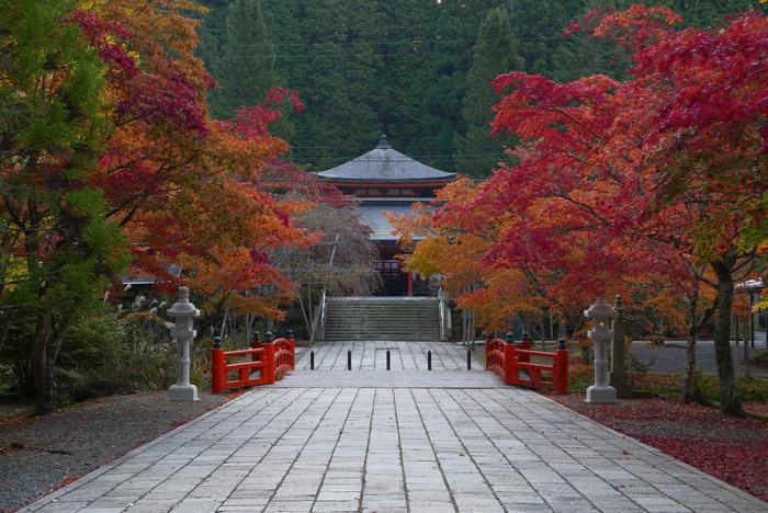 高野山,紅葉(P1000255,F6.3,29.3mm,LX100)2014yaotomi.jpg