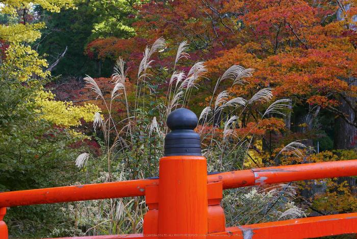 高野山,紅葉(P1000260,F6.3,34mm,LX100)2014yaotomi.jpg
