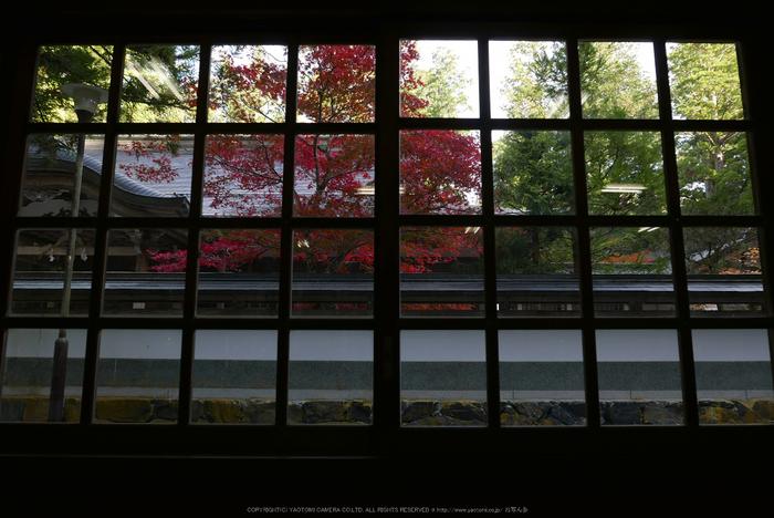 高野山,紅葉(P1000275,F3.2,11.4mm,LX100)2014yaotomi.jpg