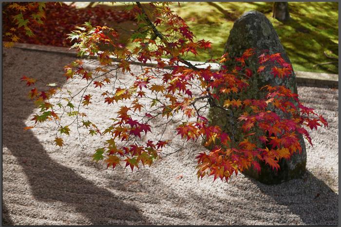 高野山,紅葉(P1000462,F3.2,LX100,Top)2014yaotomi.jpg