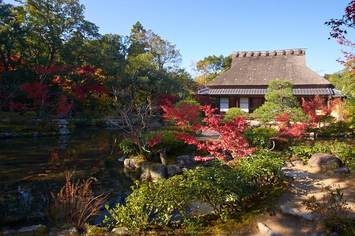 依水園,紅葉(PK3_0543,F9,16mm,K3)2014yaotomi_.jpg