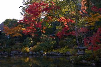 依水園,紅葉(PK3_0555,F8,31mm,K-3)2014yaotomi_.jpg