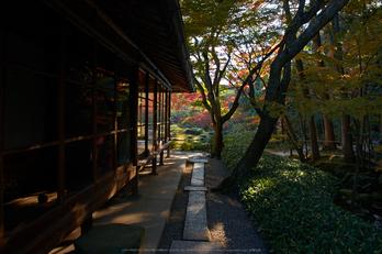 依水園,紅葉(PK3_0589,F9,16mm,K-3)2014yaotomi_.jpg