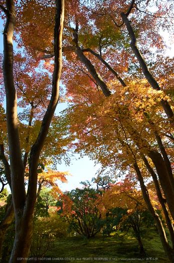 依水園,紅葉(PK3_0630,F7.1,16mm,K-3)2014yaotomi_.jpg