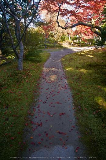 依水園,紅葉(PK3_0660,F9,16mm,K-3)2014yaotomi_.jpg