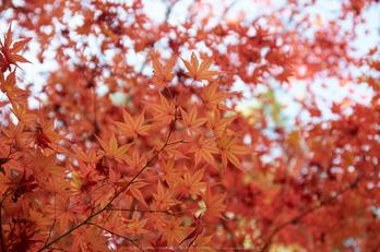 依水園,紅葉(PK3_0672,F4.5,53mm,K-3)2014yaotomi_.jpg