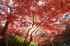 依水園,紅葉(PK3_0674,F10,16mm,FULL)2014yaotomi_.jpg