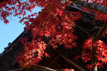 依水園,紅葉(PK3_0687,F4.5,53mm,K-3)2014yaotomi_.jpg