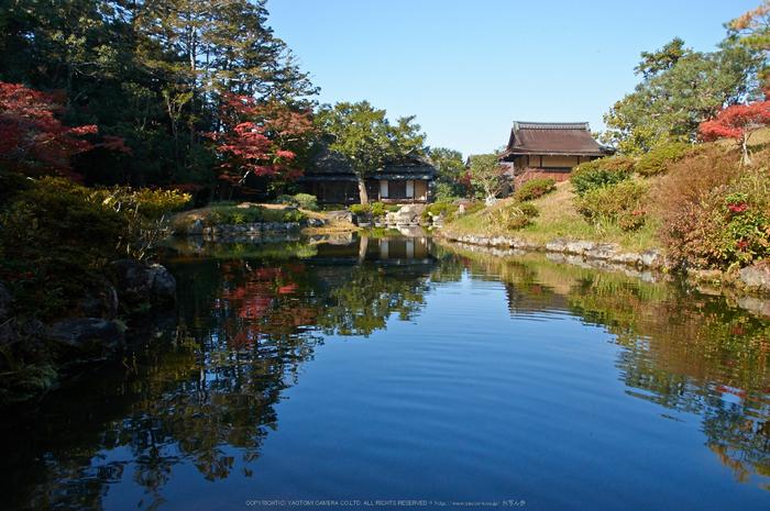 依水園,紅葉(PK3_0697,F10,16mm,K-3)2014yaotomi_.jpg