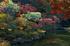 依水園,紅葉(PK3_0701,F10,21mm,FULL)2014yaotomi_.jpg
