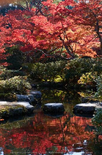 依水園,紅葉(PK3_0711,F8,43mm,K-3)2014yaotomi_.jpg