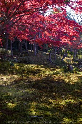 依水園,紅葉(PK3_0714,F8,31mm,K3)2014yaotomi_.jpg