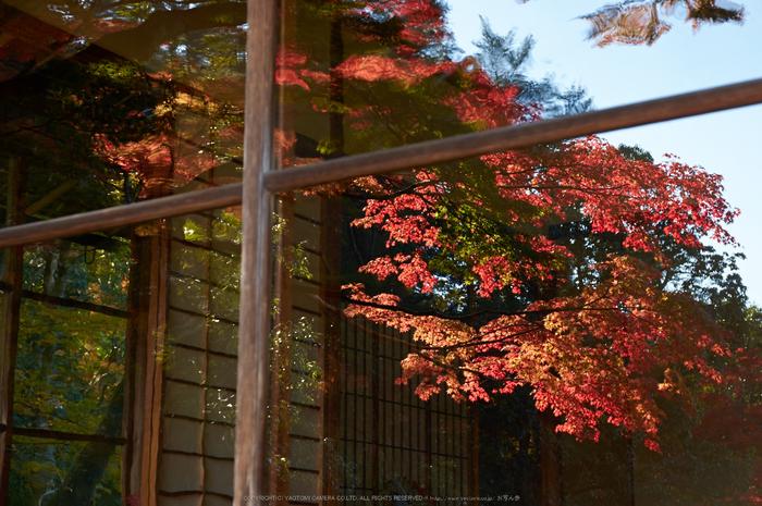 依水園,紅葉(PK3_0759,F6.3,43mm,K-3)2014yaotomi_.jpg