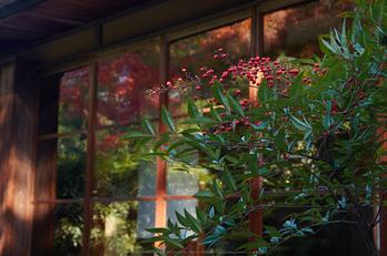 依水園,紅葉(PK3_0763,F7.1,48mm,K-3)2014yaotomi_.jpg