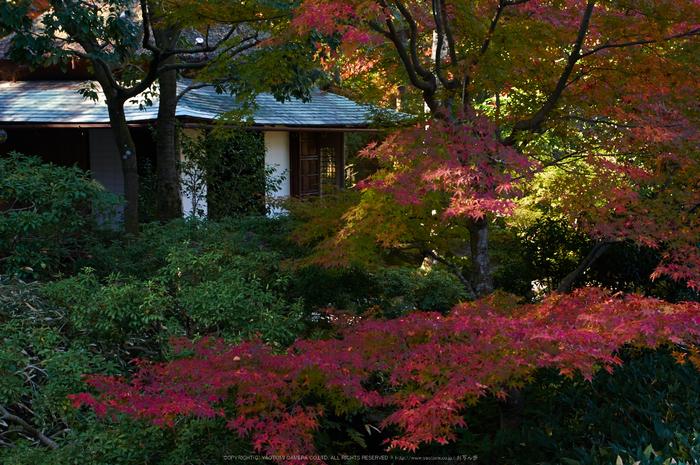 依水園,紅葉(PK3_0765,F7.1,31mm,K-3)2014yaotomi_.jpg