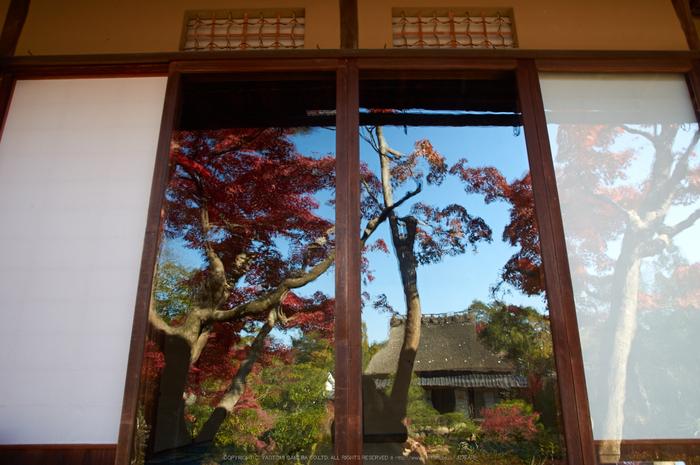 依水園,紅葉(PK3_0774,F7.1,16mm,K-3)2014yaotomi_.jpg