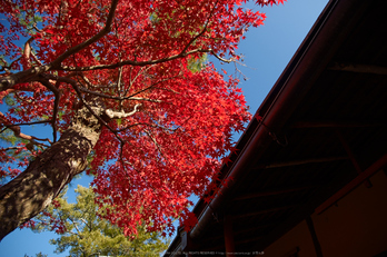 依水園,紅葉(PK3_0778,F4,16mm,K-3)2014yaotomi_.jpg
