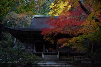 室生寺,紅葉(DSC_1536,F4.5,35mm,D750)2014yaotomi_.jpg