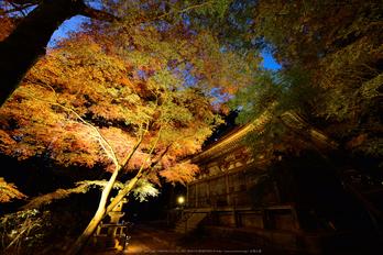 室生寺,紅葉(DSC_1605,F7.1,14mm,D750)2014yaotomi_.jpg