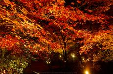 室生寺・紅葉(PB260134,12mm,F8,EM1)2014yaotomi_.jpg