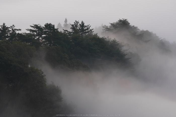 屏風岩公苑,紅葉(P1000018,F8,107mm,GM1S)2014yaotomi.jpg