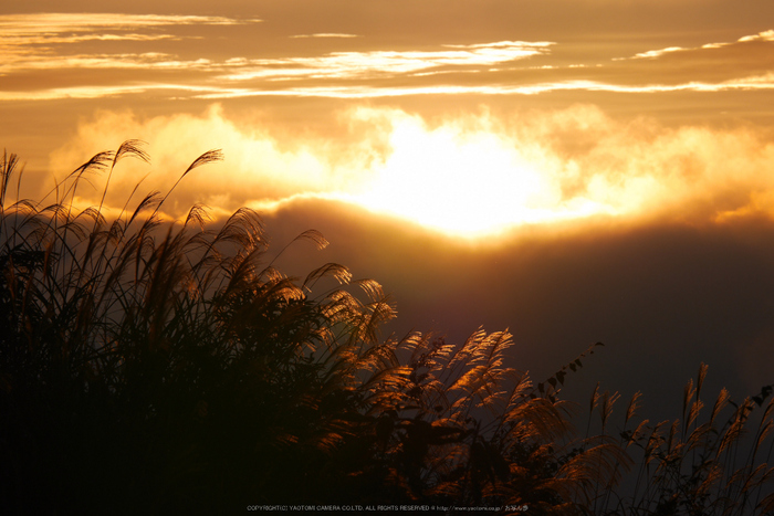屏風岩公苑,紅葉(P1000045,F10,169mm,GM1S)2014yaotomi.jpg