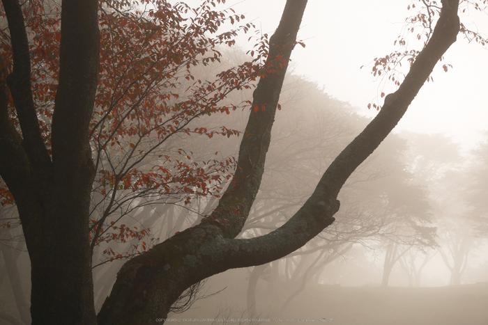 屏風岩公苑,紅葉(P1000115,F5.5,45mm,GM1S)2014yaotomi.jpg