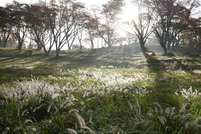 屏風岩公苑,紅葉(P1000137,F4.9,22mm,GM1S)2014yaotomi.jpg