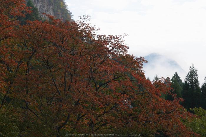 屏風岩公苑,紅葉(P1000205,F11,80mm,GM1S)2014yaotomi.jpg