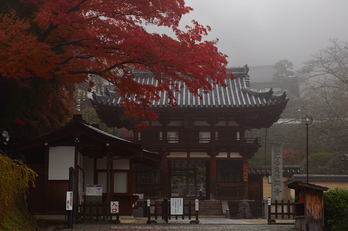 岡寺,紅葉(PB260015,38mm,F6.3,EM1)2014yaotomi_.jpg