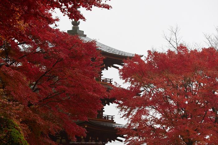 岡寺,紅葉(PB260034,95mm,F3.2,EM1)2014yaotomi_.jpg