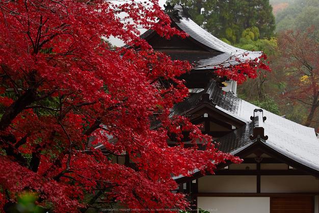 岡寺,紅葉(PB260039,57mm,F3.2,EM1)2014yaotomi_.jpg