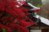 岡寺,紅葉(PB260039,57mm,F3.2,FULL)2014yaotomi_.jpg