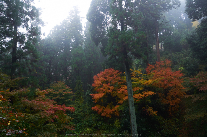 岡寺,紅葉(PB260053,12mm,F6.3,EM1)2014yaotomi_.jpg