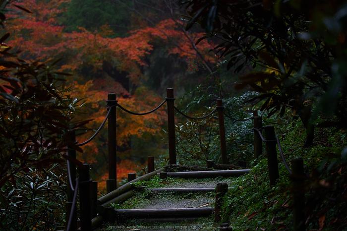 岡寺,紅葉(PB260065,60mm,F2.8,EM1)2014yaotomi_.jpg
