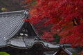 岡寺,紅葉(PB260153,82mm,F3.2,FULL)2014yaotomi_.jpg