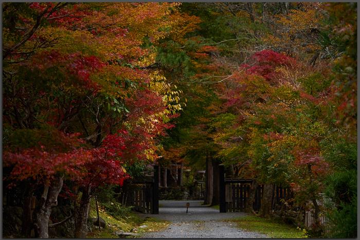 峰定寺,紅葉(PB050332,Top)2014yaotomi.jpg