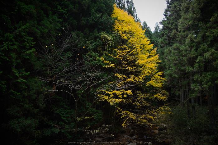 投石の滝,紅葉(DSC_1338,24mm,F4,D750)2014yaotomi.jpg