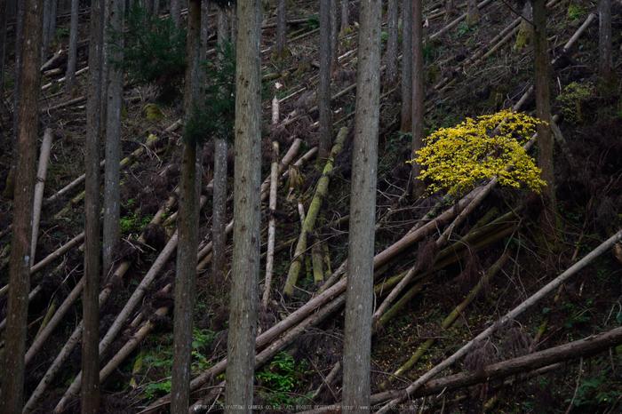 投石の滝,紅葉(DSC_1342,62mm,F4,D750)2014yaotomi.jpg