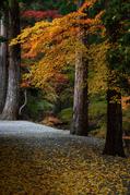 投石の滝,紅葉(DSC_1344,55mm,F5.6,FULL)2014yaotomi.jpg