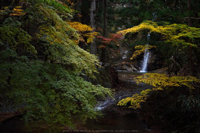 投石の滝,紅葉(DSC_1346,52mm,F5.6,D750)2014yaotomi.jpg
