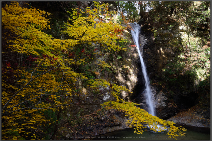 投石の滝,紅葉(DSC_1362,Top)2014yaotomi.jpg