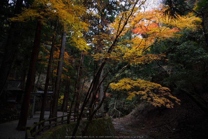 投石の滝,紅葉(DSC_1367,24mm,F6.3,D750)2014yaotomi.jpg
