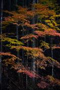 投石の滝,紅葉(DSC_1377,52mm,F4.5,FULL)2014yaotomi.jpg