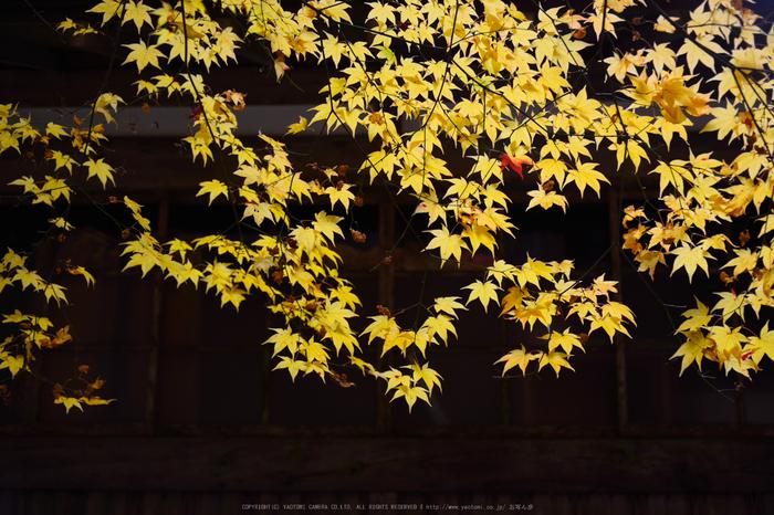 投石の滝,紅葉(DSC_1381,50mm,F4.5,D750)2014yaotomi.jpg