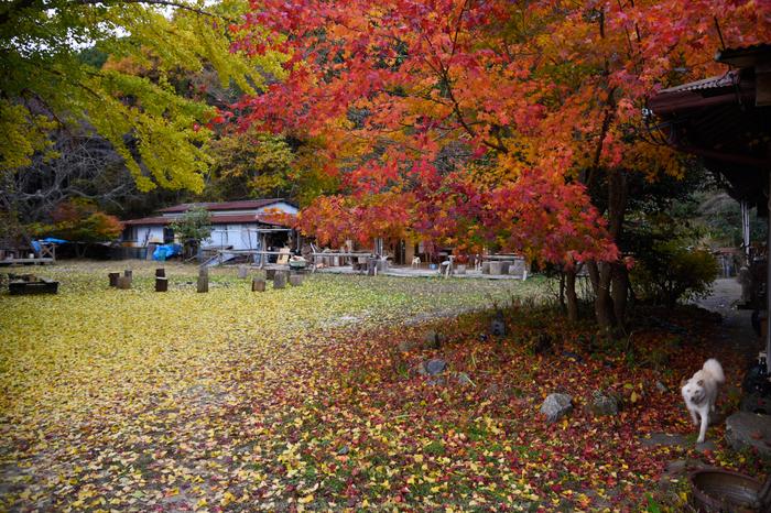 投石の滝,紅葉(DSC_1392,24mm,F4,D750)2014yaotomi.jpg