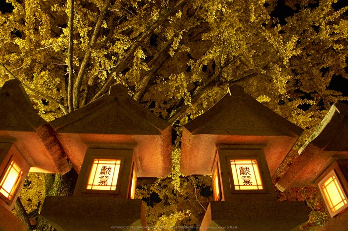 朝護孫子寺,紅葉(PK3_0186,F10,16mm,K3)2014yaotomi_.jpg
